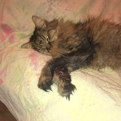 #кот #котэ #кошки #2014 #katz #katzen #cat #cats #instacats #catsagram #catsofinstagram #instacats #we_love_cats #instagramcats #caturday #catoftheday #猫 #kass #kočka #mačka #chat #kissa #кішка #kedi #kot #katt #고양이 #貓 #gato #kucing Instagramcats Catsagram Cat Catoftheday Cats 2014 Gato кот 貓 Instacats Katzen кошки котэ 고양이 Caturday Katt Kedi Kot 猫 We_love_cats Chat Kass Kissa Katz Kucing Kočka Macka кішка Catsofinstagram