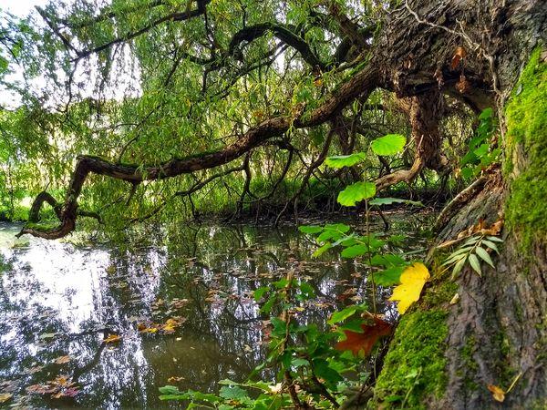 Tree River Nature