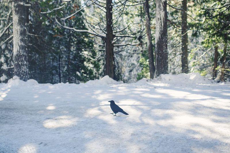 Bird on snow covered trees