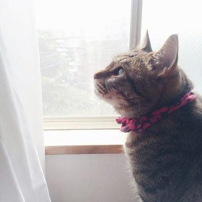 今日は5年目の結婚記念日💍 ・ これからもどうぞヨロシクね♩ ・ ・ 2015.7.3◎ 猫さんとの生活 ねこ にゃんだふるらいふ ねこのいる生活 ig_cat cat_stagram nekostagram neko catworld_kawaii_cats 結婚記念日 vscocamvscocats きじとら きんたろう 3歳