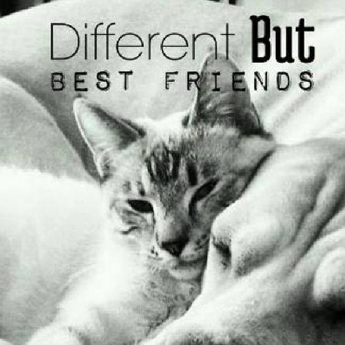 Likecatsanddogs Friendship