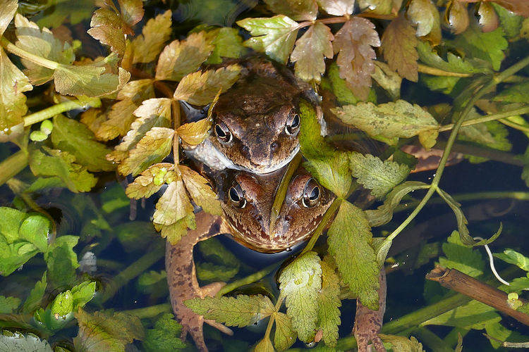 Beauty In Nature Botany Close-up Frog Frosch Outdoors Zoology