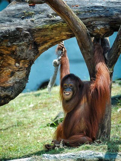 Monkey sitting on tree trunk in zoo