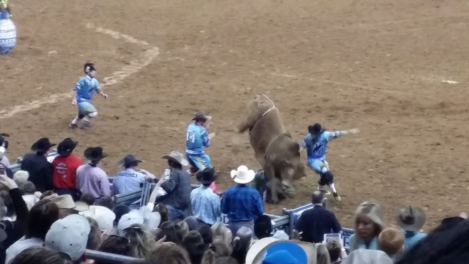 Taking Photos Enjoying Life Check This Out Hanging Out at the Houston Livestock Show and Rodeo. This bull came down and landed on the rider it bucked off