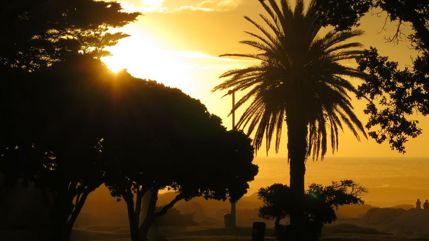 Beauty In Nature Day Nature No People Outdoors Palm Tree Scenics Silhouette Sky Sunset Tranquility Tree Tree Trunk