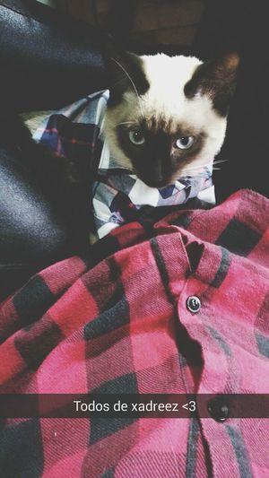 Cat Bartholomew