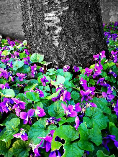 Flower Purple Outdoors No People Beauty In Nature
