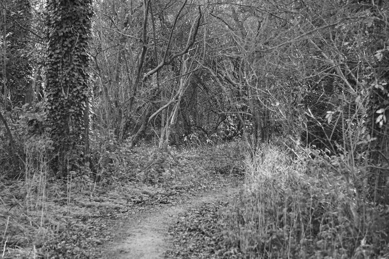 Alone Blackandwhite Cold Eery Leaf Leaves Pathway Tree Trees WoodLand Woodland Walks Woodlands Woodlandwalks Woods