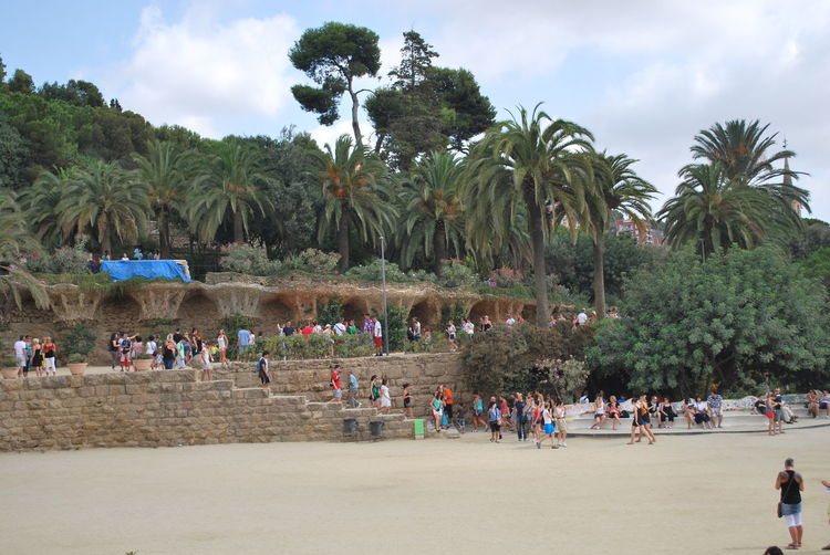 Barcelona Barcelona, Spain Catalonia Catalunya Gaudi Palm Palm Tree Palm Trees Park Park Guell Park Güell, Barcelona SPAIN