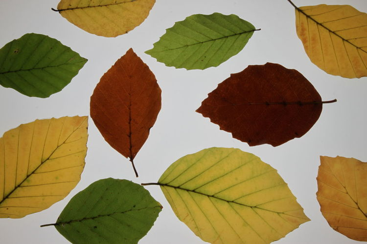 Veins In Leaves Autumn Beauty In Nature Biology Close-up Day Flora Fragility Growth Leaf Leaves Nature No People Outdoors Plant Structure