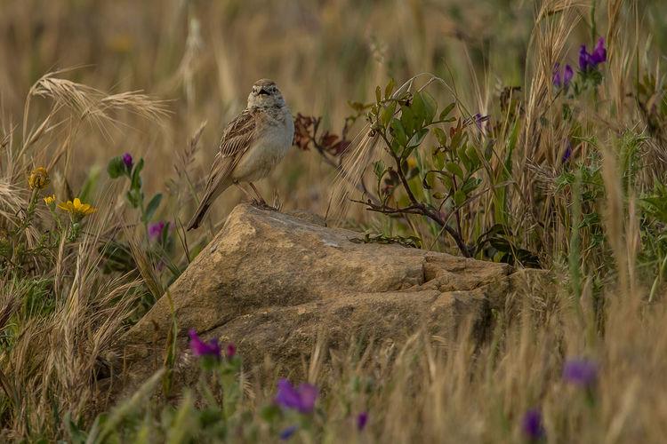 Bird perching on rock