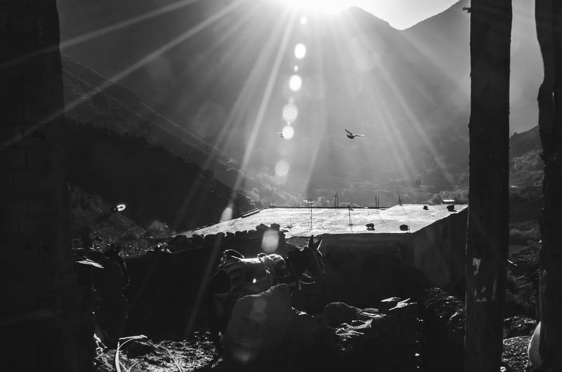 Atlas Imlil Architecture Bird Blackandwhite Bright Day Hanging Indoors  Lens Flare Lifestyles Nature Real People Stage Sun Sunbeam Sunflair Sunlight Sunny Sunset Transparent