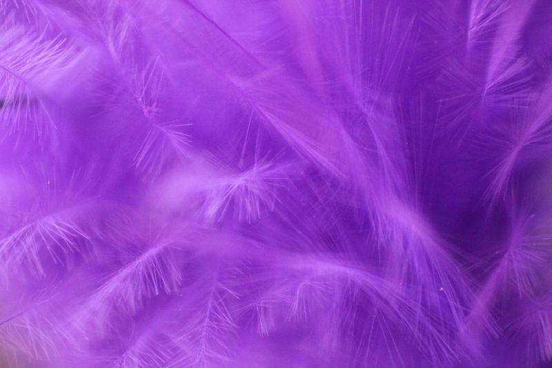 Feathers Feather  Pastel Power Pastel Pastel Colors Showcase: February Fredrikstad