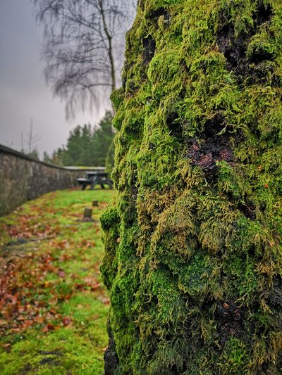 Moss moss moss Moss Wetland Mossy Mossporn Mossy Tree Mossy Tree Wall Silverbirch Autumnal Nature Picknickbench Close-up Tiny Planet No Filter, No Edit, Just Photography P20 Pro Rainy Days Wet Wet Wet Wales Tree Sky Close-up Green Color Countryside Tree Trunk Growing Green Greenery Bark Woods