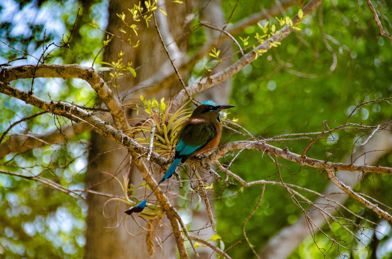 Motmot Sägeracken Animal Animal Wildlife Animals In The Wild Beauty In Nature Bird Momótidos Nature Outdoors Tree
