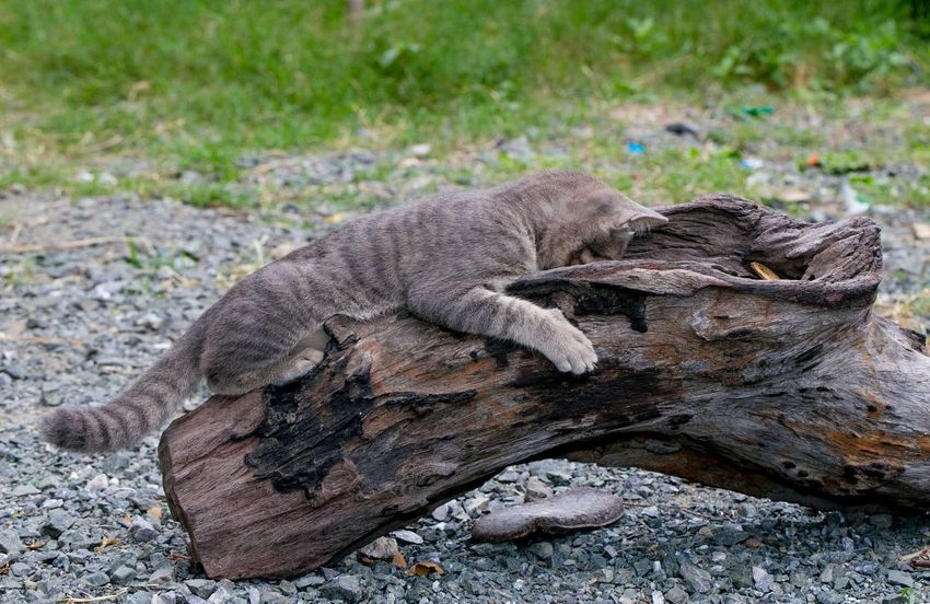 Cute little cat Animal Themes Animal Wildlife Animal Animals In The Wild One Animal No People Vertebrate