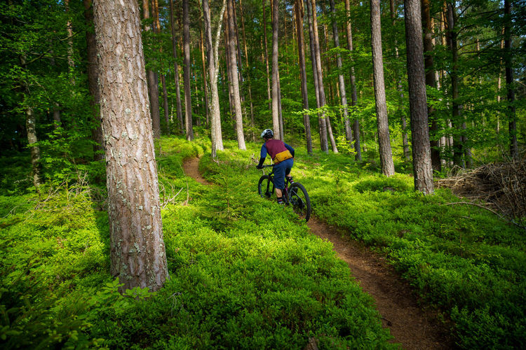 A young man riding a mountain bike on a singletrail in the forest near klagenfurt, austria.