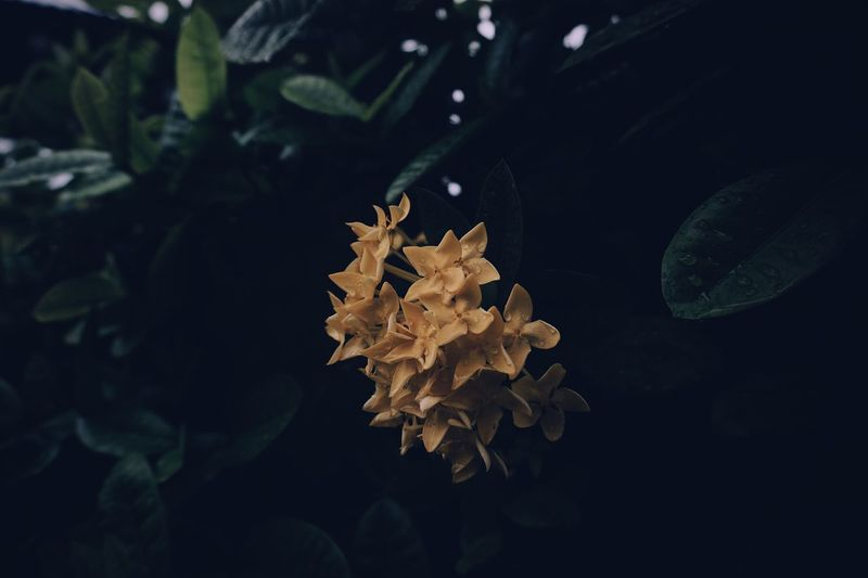 EyeEm Selects Leaf Plant Part Nature No People Plant Close-up Black Background Change Tranquility Cold Temperature Leaves Water Night Green Color Yellow Growth Beauty In Nature Indoors  Autumn Fragility
