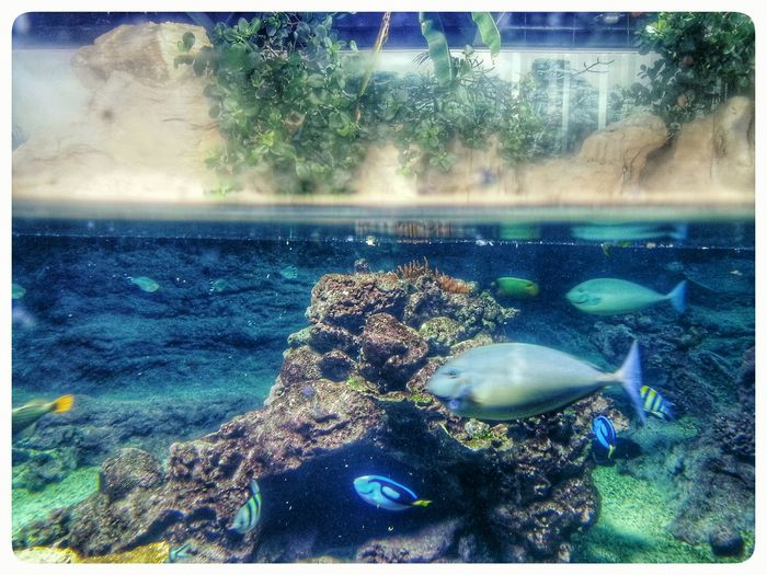 Interface at Acquario Di Genova. Note 2 Smartphone Photography Water Multi Colored Underwater Aquarium Indoors  Cross Section Surface Of The Water Fishes Fish Tank