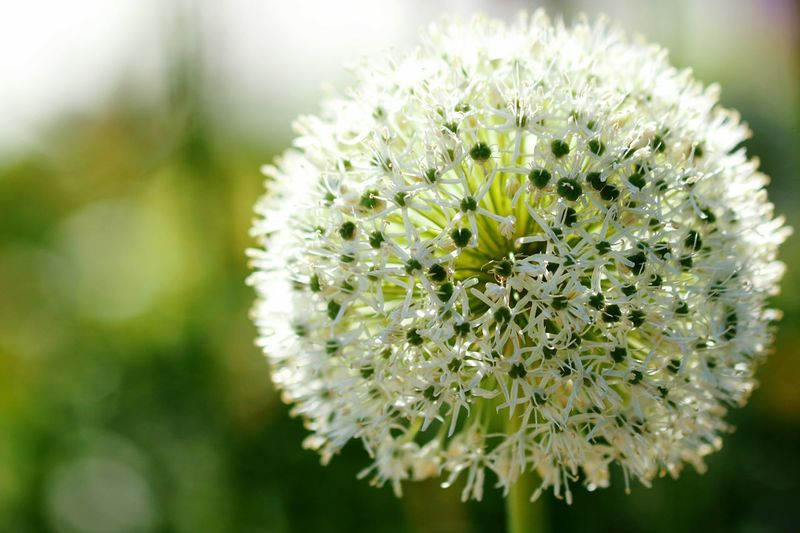 Close-up of white flower outdoors
