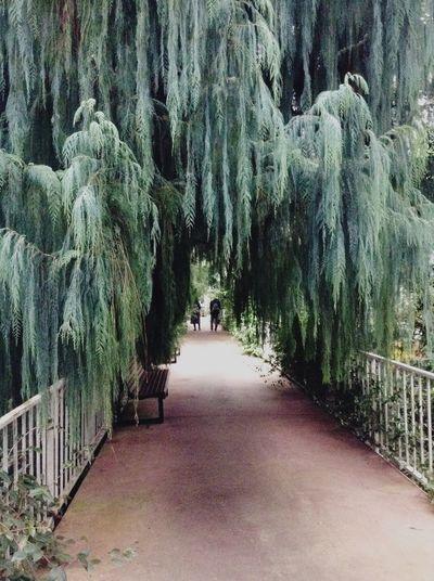 Hanging tree. Trees Royal Botanic Gardens Botanical Gardens Garden Green Plants Walking Around