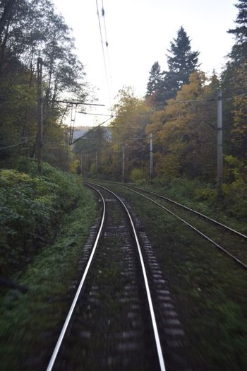 Way To Go Home Way Transportation Railroad Track The Way Forward Cable Nature No People Outdoors