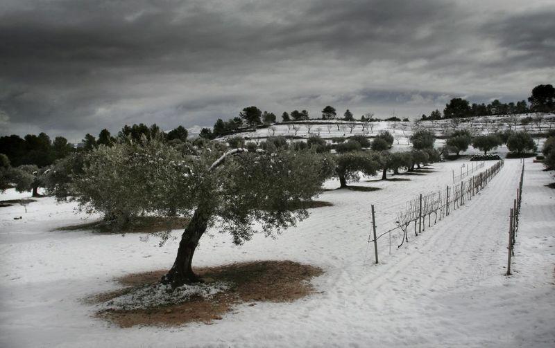 Snow in