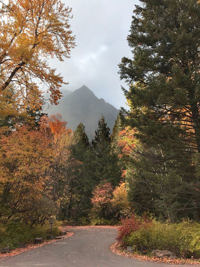 Glacier National Park Montana Glacier National Park Autumn Fall Tree Plant Beauty In Nature Sky Growth Nature Tranquility