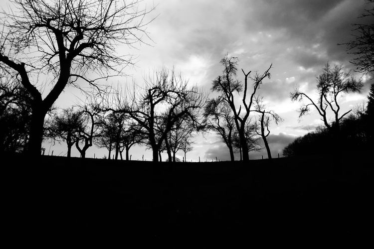 Rural landscape at dawn in the Eifel region of Germany. Tourist Destination Wood Mysrerious Dawn Dusk Evening Black And White Blackandwhite Tranquil Scene Rural Scene Tree Silhouette Sky Cloud - Sky Plant Bare Tree Nature Tranquility Tranquil Scene No People Environment Beauty In Nature Land Branch Trunk Tree Trunk Outdoors Scenics - Nature Non-urban Scene Landscape