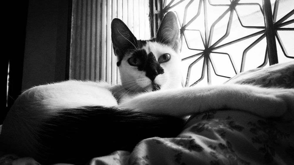 Pets Domestic Animals Domestic Cat Indoors  Day Cat EyeEm ZenfoneSelfie No People Light And Shadow Blackandwhite Pet Portraits