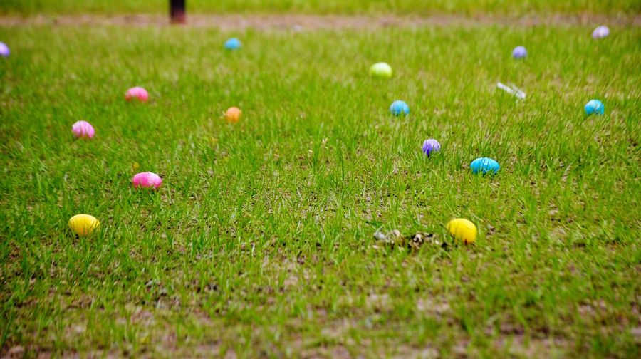 Colorful Plastic Easter eggs on the ground Colors Colorful Grass Growth Green Color Field Multi Colored Outdoors Easter Land Day Easter Egg