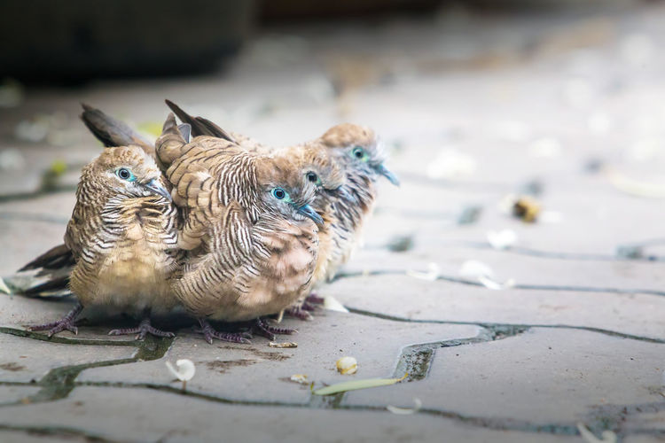 Close-up of birds eating