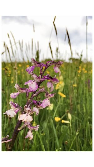 Wild Flowers Orchids Orchidporn Taking Photos The Great Outdoors - 2016 EyeEm Awards EyeEm Nature Lover EyeEm Best Shots - Nature EyeEm Photographer The World Hanging Out Flowers Flowerporn Flowers, Nature And Beauty Bloom Countryside Rural Flower Photography