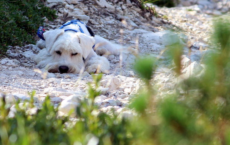 Animal Love Animal Photography Animals Best Friends Bestfriend Dog Dog Life Dog Love Doglover Dogoftheday Dogs Dogs Love Dogs Lover Dogs Of EyeEm First Eyeem Photo Pets Pets Of Eyeem Schnauzer Schnauzerlove Schnauzers