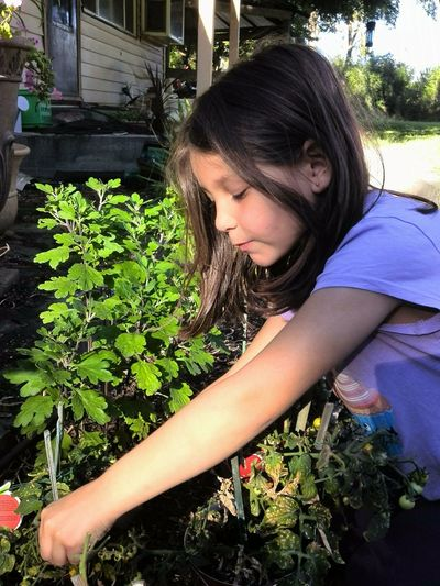 My MagPie, helping with the cherry tomatoes... Omak, Wa Grandaughter Girl Plants Helper Child Gardening Rural Life Rural Collection Eastern Washington Light Rural Scene Light And Shadow Showcase June People And Places My Year My View