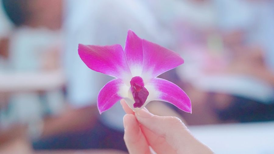 beautiful in this day Beautiful Beauty In Nature Flower Focus On Foreground Human Hand Nature Orchid Picking Flowers