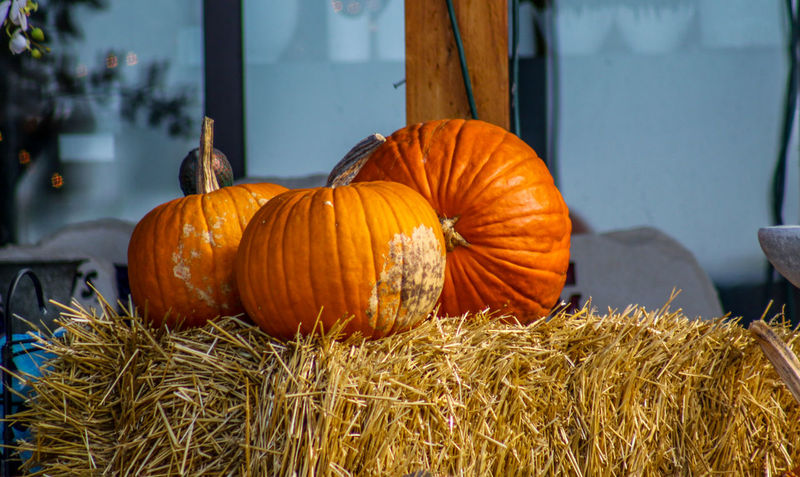 pumpkins Fall Beauty Close-up Day Food Food And Drink Freshness Halloween Hay No People Outdoors Pumpkin Pumpkins On Display Straw