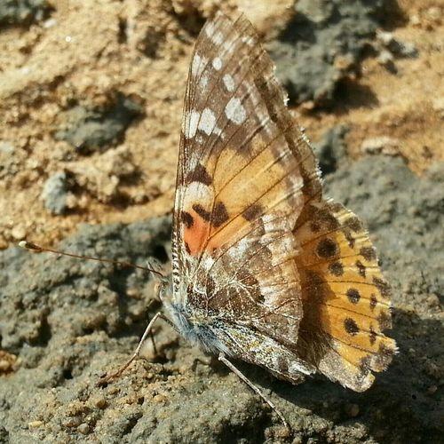 تجربتي في تصوير الحشرات ... ايه رايكم ياحبايبي ....من دون اي تعديل...........