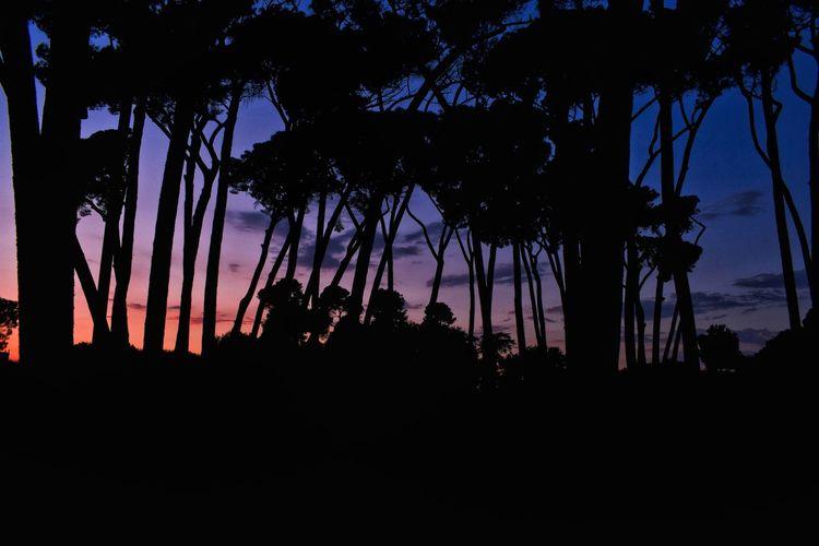 Sky Sunset Silhouette Dusk Tree Night Outdoors Nature Beauty In Nature Scenics No People Astronomy Midnight Roma Plant Beauty In Nature Nature Travel Destinations EyeEm Best Shots Nikond3300 Illuminated Travel Light And Shadow Landscape Eyesight