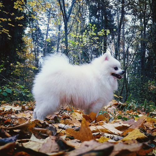 Close-up of dog standing on field during autumn
