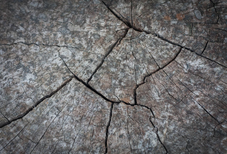 Old wooden surface textures. Closeup of wood texture. Closeup of an aged cut down tree trunk. gray tree stump. Close up of a tree trunk cut in cross section. nature background. Arid Climate Background Backgrounds Close-up Cracked Cut Wood Died Wood Full Frame Growth Nature Nature Organic Organic Food Pattern Plank S SLICE Stump Textured  The Natural World Timber Tractor Tree Tree Ring Wood