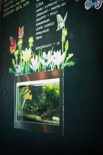 Fish tank in a wall. Fish Tank Mbar Helsinki