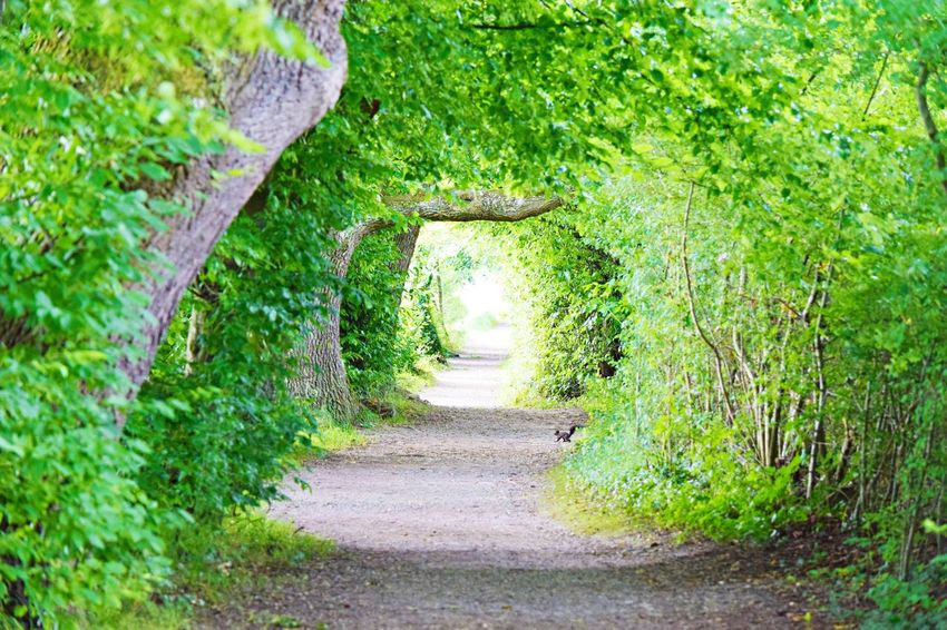 The Way Forward Footpath Green Color Nature Tree Beauty In Nature Day Bodenseeufer Outdoors Plant Grass No People Growth Walkway Seeufer Weg Bodenseeregion