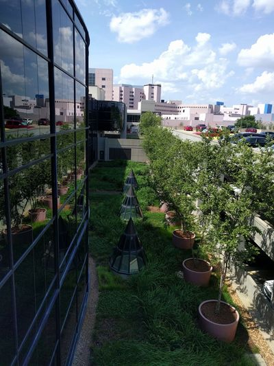 High angle view of potted plants by buildings against sky