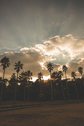 Palm trees on field against sky at sunset
