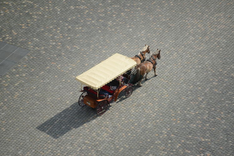 High angle view of an animal on the road