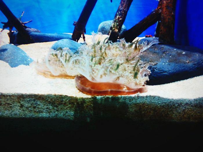 Jellyfish Aquarium Tenerife Island Loropark Best Summer