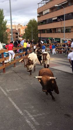 Bulls Running Party Square