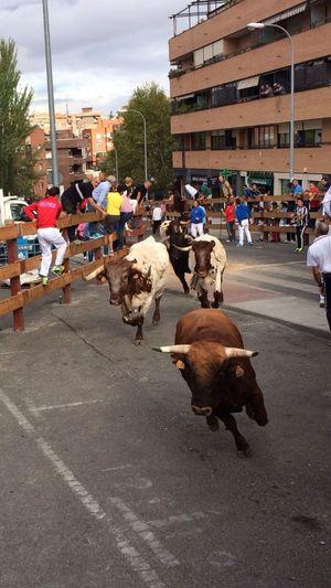 Bulls Running Party Square