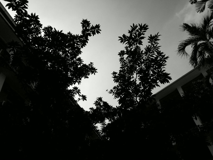 University College College Life Grounds Trees Silhouette Dark